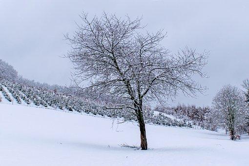 Tree, Winter, Deciduous Tree, Snow, Tristess, Cold