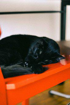 Cat, Feline, Pet, Domestic, Sleep, Asleep, Nap