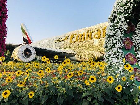 Nature, Dubai, Uae, Emirates, Sun, Travel, Adventure