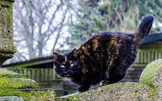 Cat, Feline, Tombstone, Grave, Cemetery, Eyes, Animal