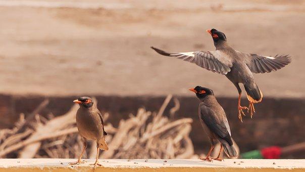 Birds, Flock, Beak, Plumage, Feathers, Avian