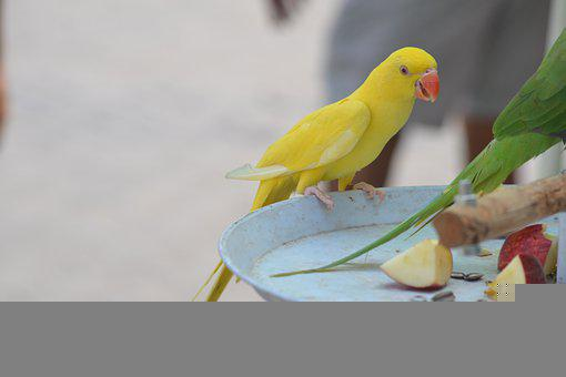 Bird, Parrot, Feathers, Feather Footed, Wings, Nature