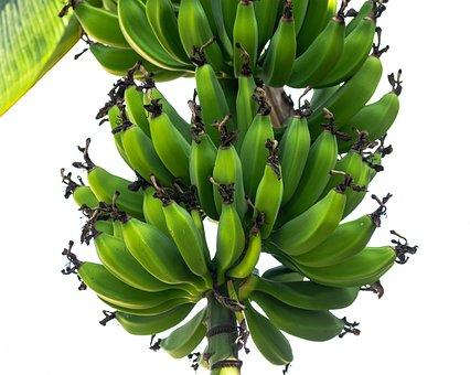 Banana Fruit Bunch, Bananas, Bunch, Food, Fruit