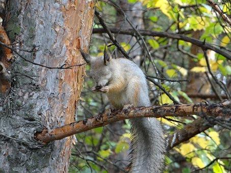 Squirrel, Animals, Pairs, Nature, Forest