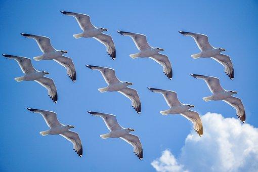 Seagull, Sea, Sky, Blue, Greece, Freedom, Nature