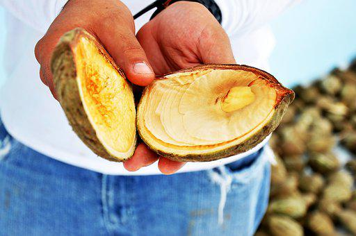Fruit, Tropical, North