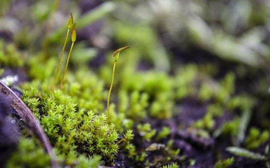 Moss, Grass, Plants, Spring, Environment, Autumn