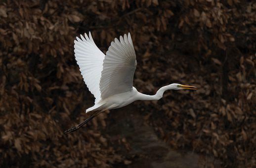 Hern, Two Solutions, Egret, Animal, Heron, Birds, Wing