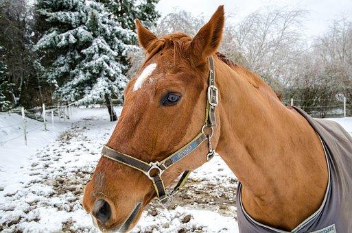 Horse, Animal, Winter, Head, Horse Blanket, Bridle