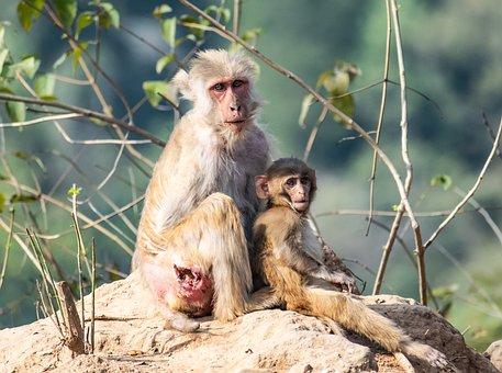 Monkey, Primate, Ape, Mammal, Baby Monkey, Baby