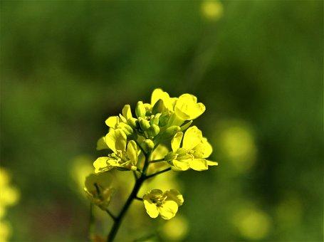 Flower, Yellow, Sunflower, Bloom, Nature, Blossom