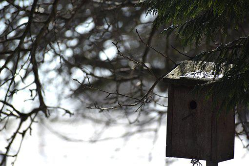Nest Box, Winter, Birds, Shelter, Garden, Nature