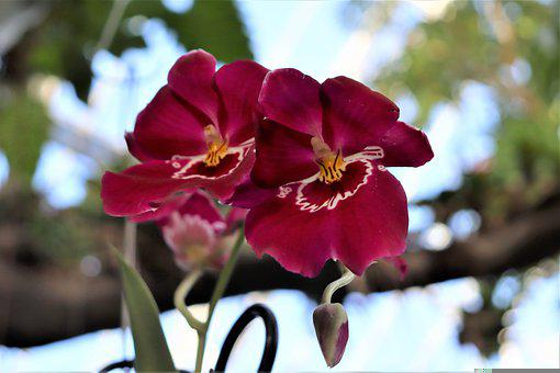Flower, Orchid, Bloom, Exotic, Nature, Tropical