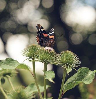 Butterfly, Burdock, Tree, Bokeh, Nature, Plant, Flora