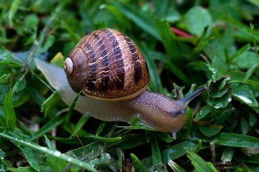 Snail, Grass, Nature, Green, Plant, Animals, Shell