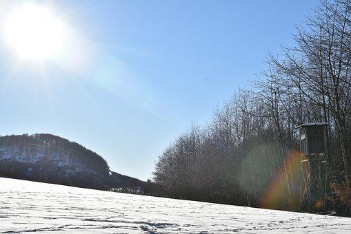 Firs, Spruce, Sun, Winter, Sky, Blue, Snow, Wintry