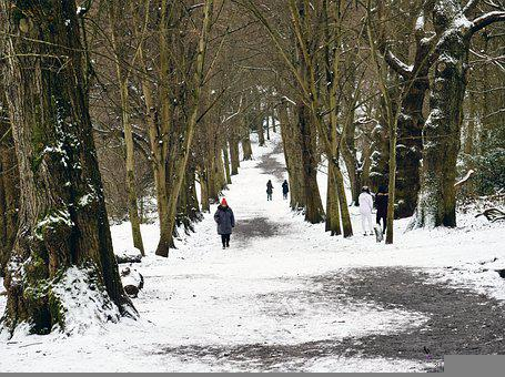 Snow, Path, Tree, Winter, Nature, Cold, Forest