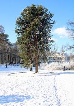 Park, Snow, White, Tree, Trees, Winter, Landscape