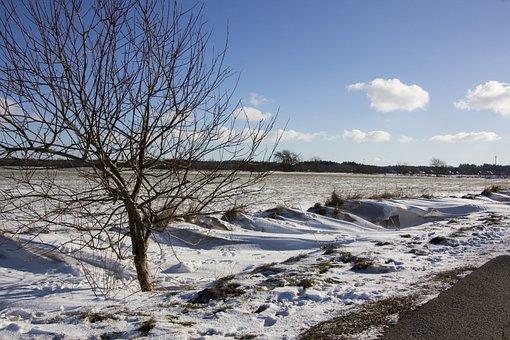 Winter Picture, Snowdrift, Powder Snow, Snowy, Cold