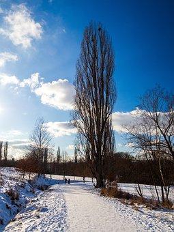 Czech Republic, The Trail, Path, Tree, High, Poplar