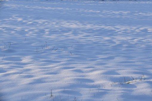 Snow, Cold, Winter Season, Winter, Blanket Of Snow