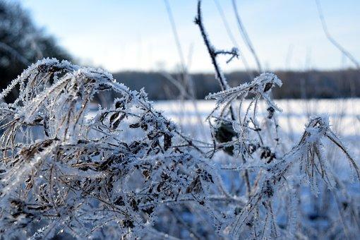 Winter, Landscape, Lake, Frozen, Eiskristalle, Grasses
