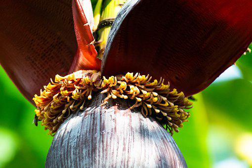 Banana Flower, Flower, Insects, Fruit, Banana, Tropical