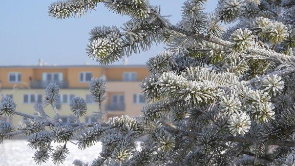 Branch, Frozen, Conifer, House, Apartment Building