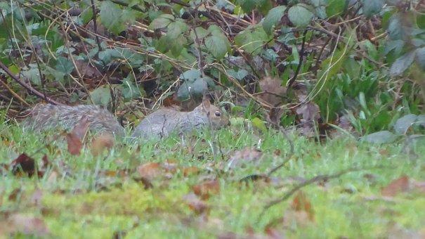 Squirrel, Nature, Animal, Chipmunk, Wildlife, Wild