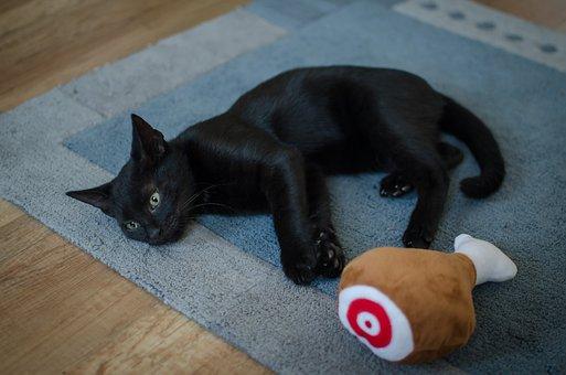 Black Cat, Cat, Pet, Kitten, Domestic Cat, Cute