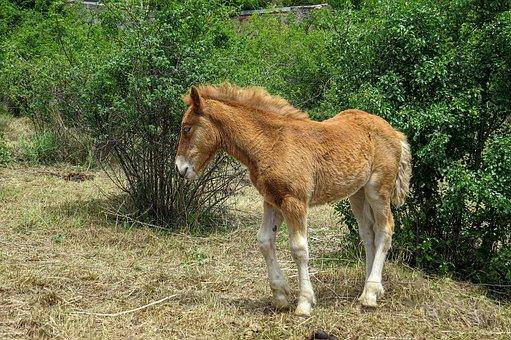 Colt, Rearing Horse, Animal, Equine, Horse, Mammal