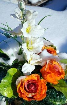 Flowers, Blossom, Bloom, Snow, Nature, Flora