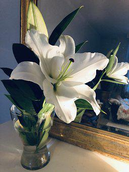 Flower, Lily, Home