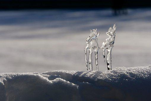 Magic, Nature, Deer, Ice, Winter, Schönwetter, Snow