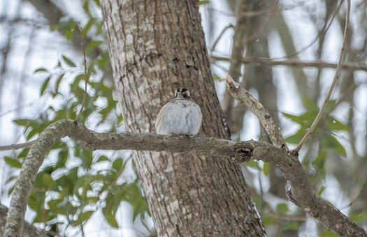 Bird, Animal, Nature, Sparrow, Winter, Snow, Ice