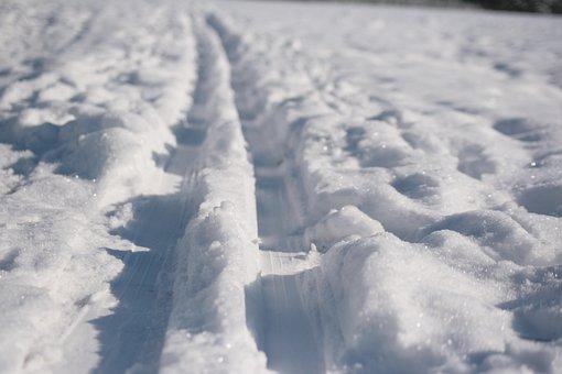 Trail, Ski, Wintry, Cross Country Skiing, Nature, White