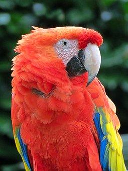 Zoo, Animals, Birds, Feathers, Beak, Parrot, Nature