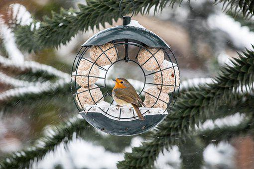 Bird, Robin, Bill, Plumage, Songbird, Garden, Feather
