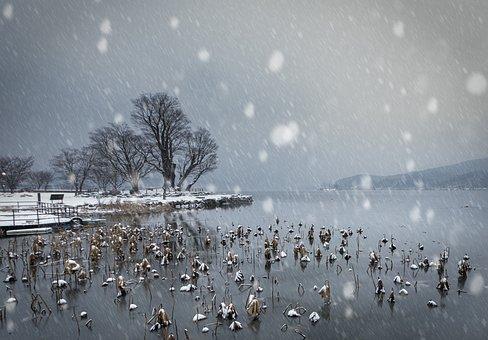 Snow, Wood, Winter, Landscape, Sky, Pure White, White