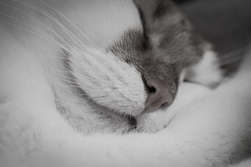 Cat, Sleep, Tired, Domestic Cat, Charming, Relaxed, Pet