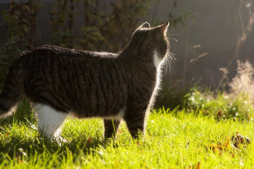 Cat, Feline, Rest, Resting, Pet, Furry, Furry Cat