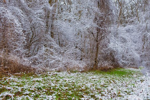 Winterimpression, Snow, Grass, Winter Magic, Trees