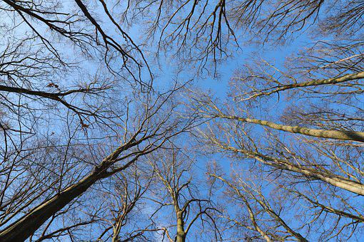 Trees, Crown, Tree, Winter, Forest, Beech, Cold, Nature