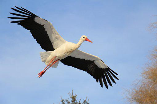 Stork, Uiver, Feeding, Winter, Fly, Wings, Hunger, Cold