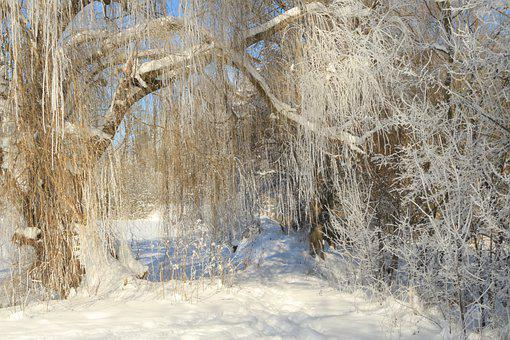 Fairy Tale Forest, Winter Forest, Wintry