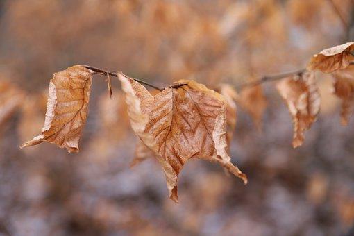 Autumn, Foliage, Nature, Forest, Mood, Sheet, Season