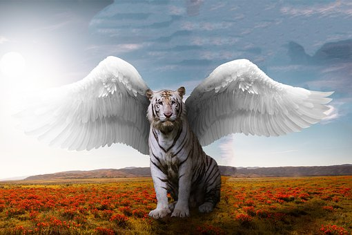 Light, Tiger, Cat, Nature, Sun, Colorful, Big