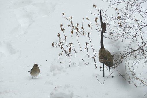 Bird, Snow, Songbird, Fringilla Coelebs, Female, Nature