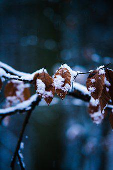 Frost, Dried Leaves, Branch, Snow, Hoarfrost, Ice