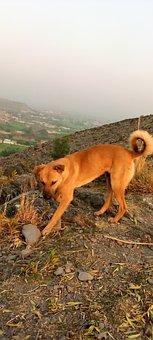 Pet, Dog, Mountain, Mountain Pose, Outdoor, Walk